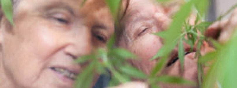 Reverse The Aging Process Using Cannabis
