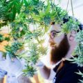 Cannabis 101 For Beginners