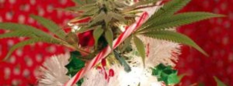 Prepare Your Cannabis Gifts On Christmas