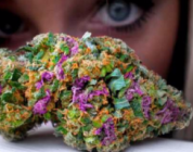 Cannabis: Treatment For Bipolar Disorder
