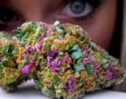 Cannabis: Treatment For Bipolar Disorder